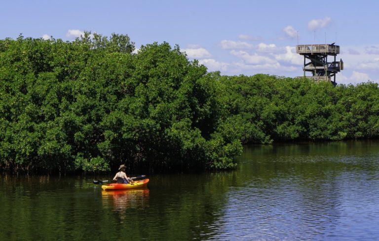 Robinson Preserve Kayaking